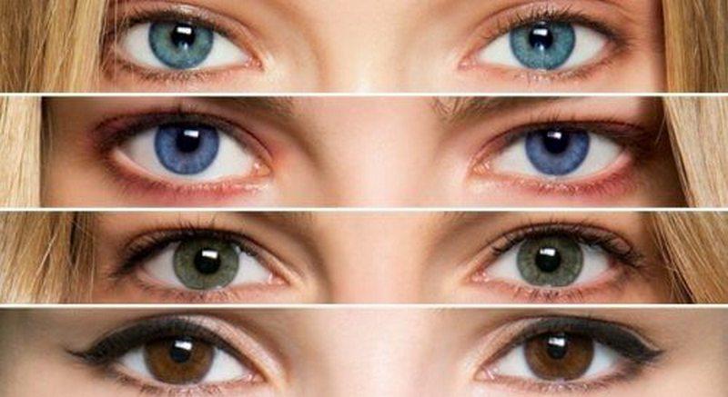 хабаровский край определить цвет глаз по фотографии сбору школьных