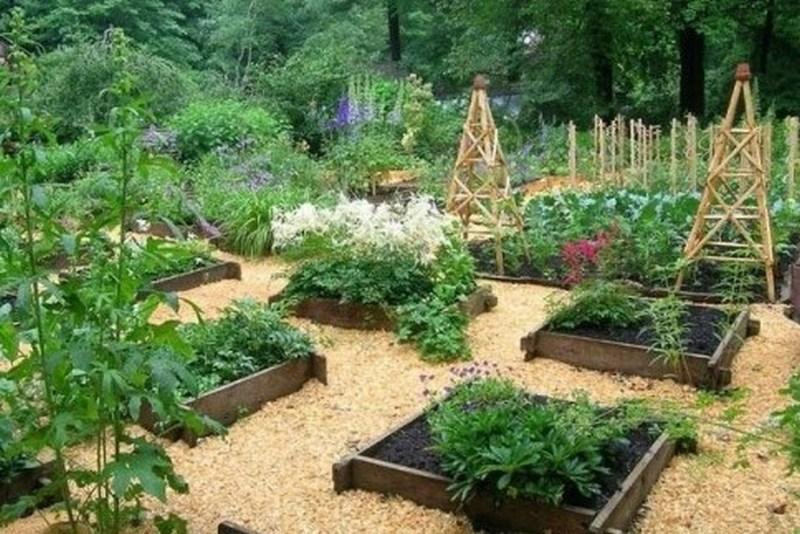 Как еще можно использовать опилки в саду